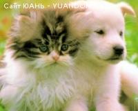 Купить : Ветеринария. Биопрепараты для здоровья всех животных