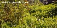 Продаю сад. г. Бор, ул. Гоголя, СНТ «Здоровье».